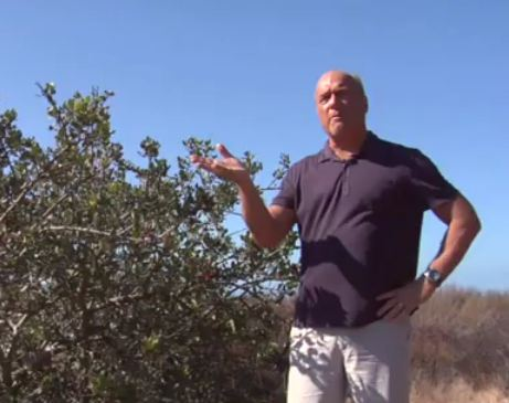 Pastor Greg Laurie Explains the Parable of the Sower